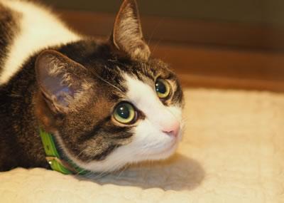 豊富な猫の夢の意味!37個の猫の夢占い